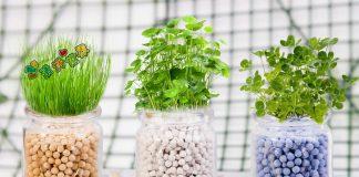 đất nung trồng cây màu sắc