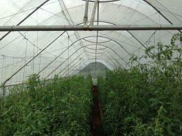 Nhà kính mini cho nhà vườn, farmstay
