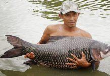 Thu bạc tỉ nhờ mô hình nuôi cá hô thương phẩm