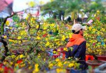 Top 10 loại cây kiểng cho mùa Tết 2021