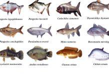 Danh sách các loài cá nước lợ bà con nên nuôi