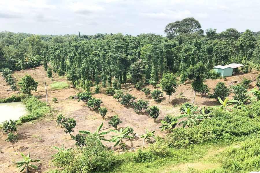 Rắc rối khi mua đất làm nhà vườn