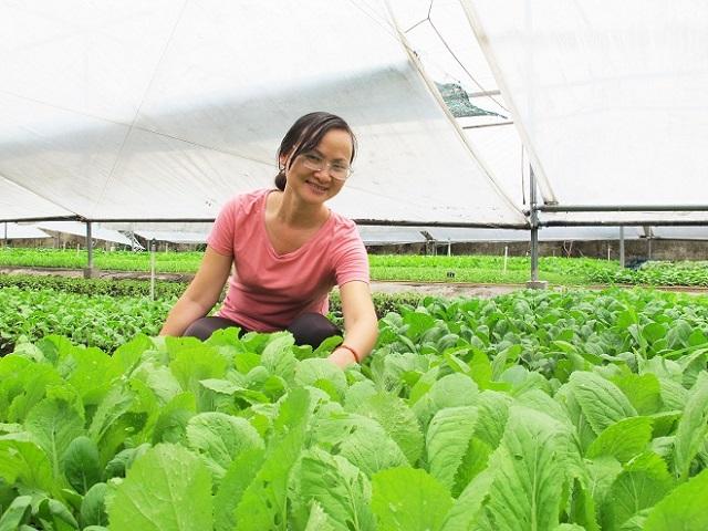 Mô hình trồng rau Organic phải có sự hỗ trợ tư vấn kỹ thuật từ các chuyên gia
