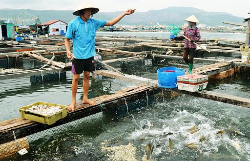Chọn con giống tốt trong nuôi trồng thủy sản