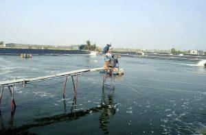 Thẩm định chất lượng nước trong nuôi trồng thủy sản